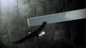 "Arashi ""To be free"""