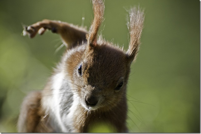 Ninja Squirrel♥