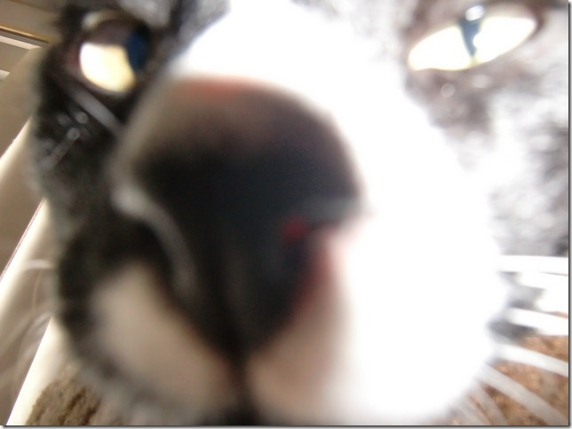 Jonny smelling my camera