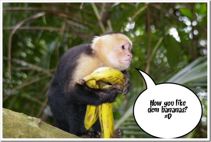 the white faced monkey says...