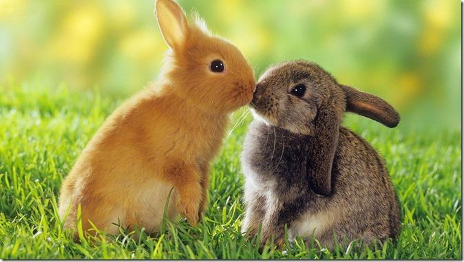 Bunnies♥