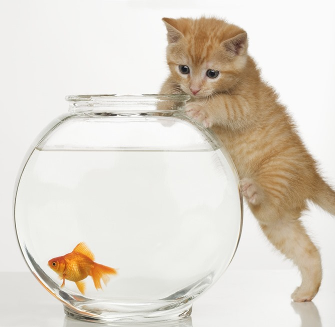 kitty & goldfish