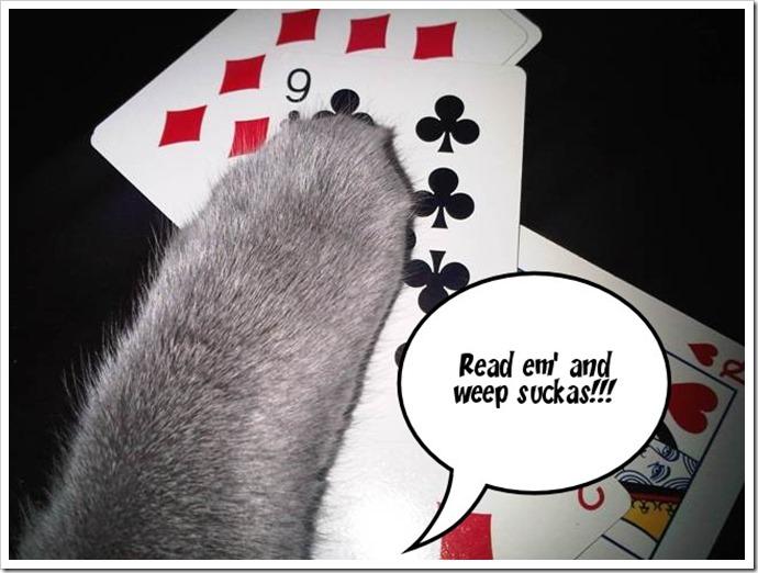 Kitty says....