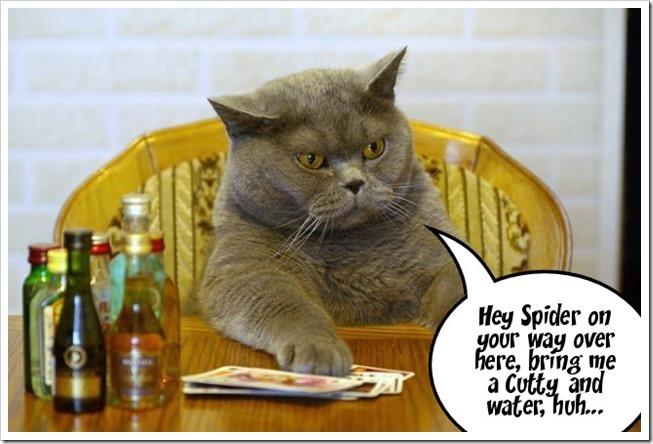 Kitty says.....