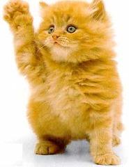 Kitten's oath