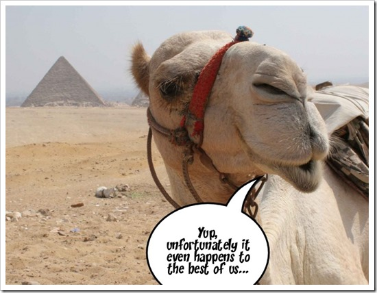 The Camel says...