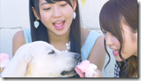 AKB48 in Labrador Retriever (19)