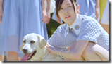 AKB48 in Labrador Retriever (27)