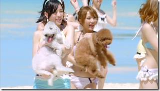 AKB48 in Labrador Retriever (43)