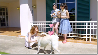 AKB48 in Labrador Retriever (9)