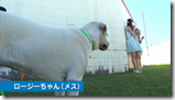 AKB48 in making of Labrador Retriever (27)