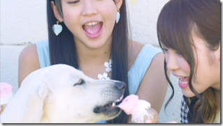 AKB48 in making of Labrador Retriever (31)