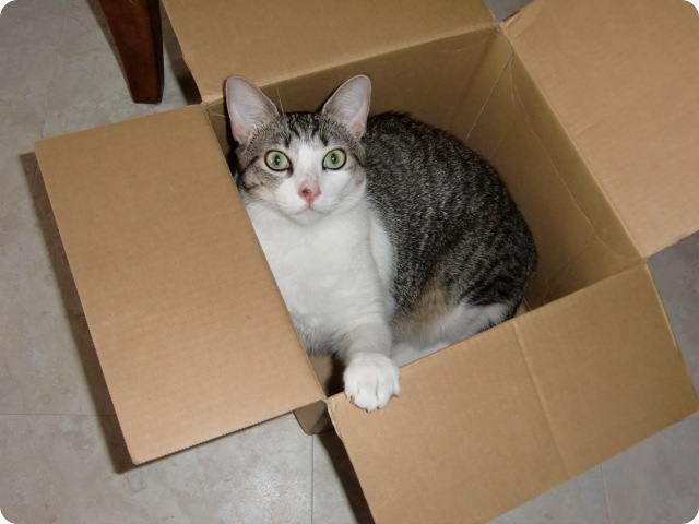 Yuko♥ in a Box