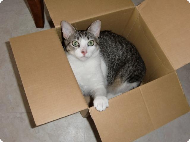 Yuko♥ in a Box
