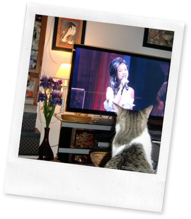 Even cats love Yakushimaru Hiroko!