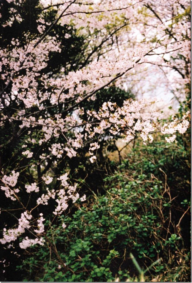 Miyawaki Sakura SAKURA shashinshuu (5)