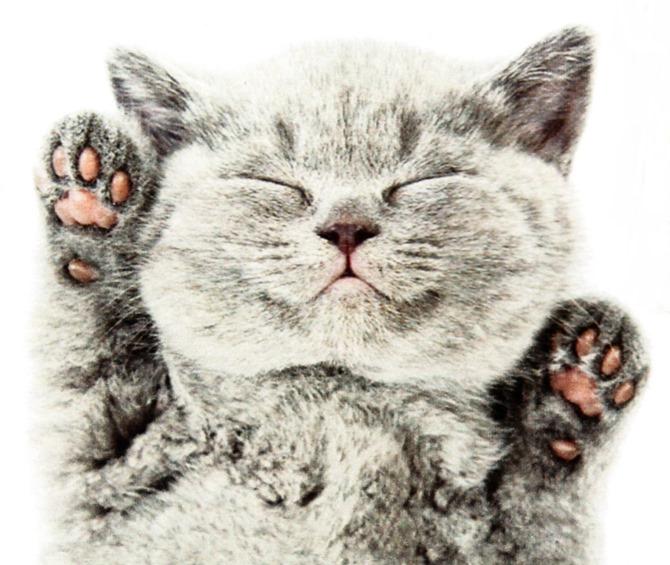 kitty♥