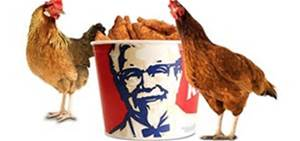 Colonel Sanders with Chicken....