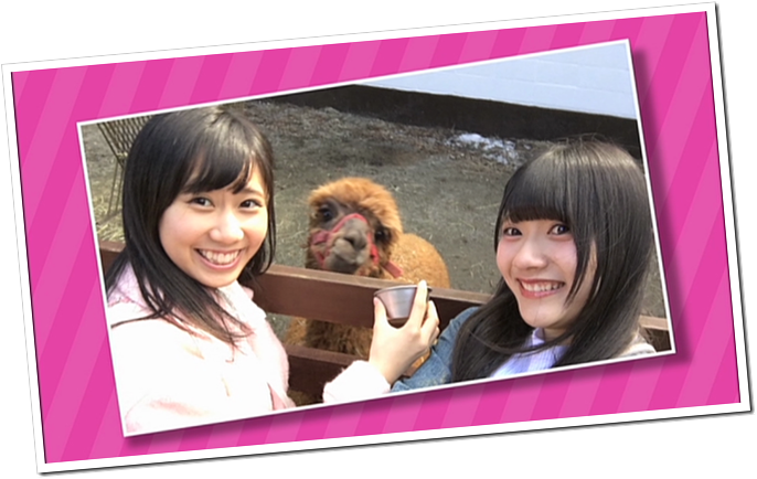 HKT48 Mystery Bus Tour excerpt FT. Alapca Time! (1)