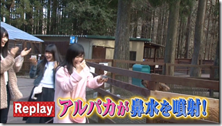 HKT48 Mystery Bus Tour excerpt FT. Alapca Time! (7)